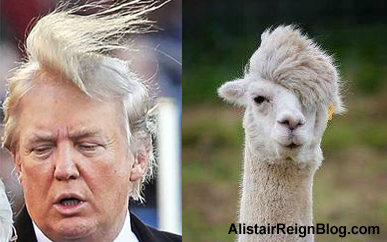 Donald Trump and Alpaca Alistair. alistairreignblog.com