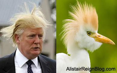 Satire: Pets That Look Like People – Alistair Reign News Blog