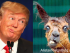 Donald Trump and I Lama Crazy. alistairreignblog.com
