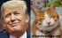 Donald Trump and a Cheshire cat have the same smug smile.